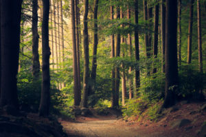 Plany ochrony i plany zadań ochronnych dla obszarów chronionych